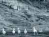 Where flamingos fly