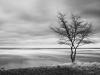 Trädet och Vinden